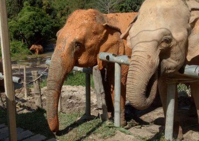 Voyage solidaire humanitaire sur la terre des éléphants