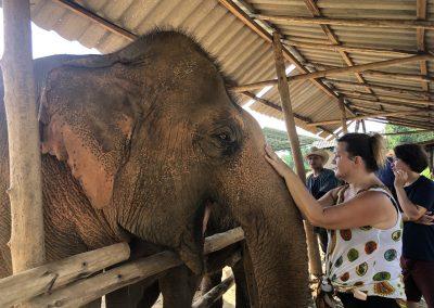Voyage initiatique sur la terre des éléphants